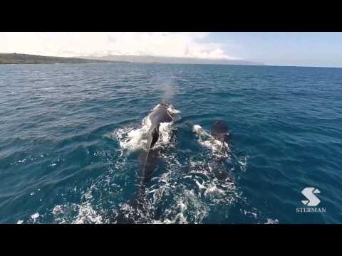 Drone Whale Watching Hawaii