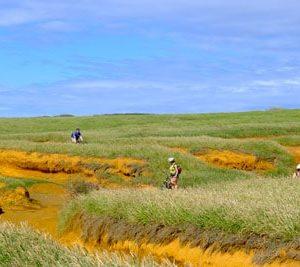 Biking along green sand beach