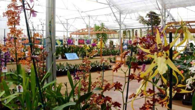 akatsuka orchid garden, big island, hawaii, orchids