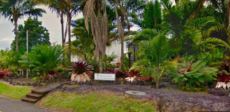 botanical gardens, UH Hilo, big island