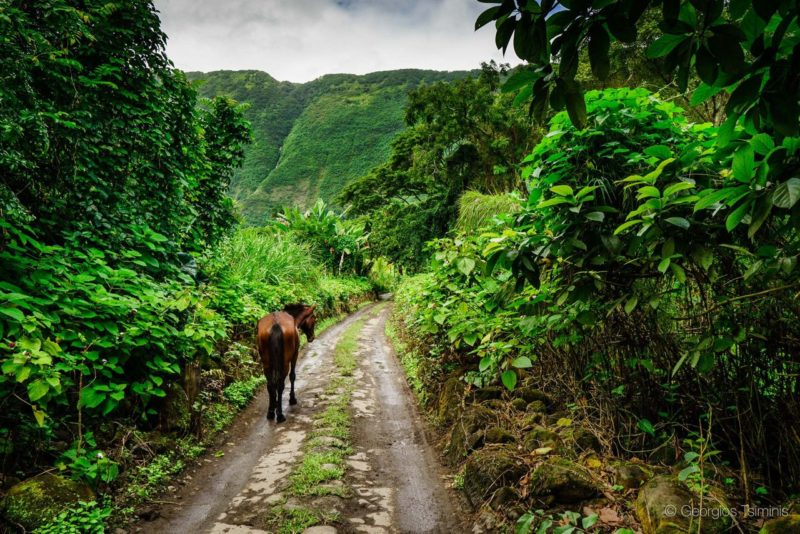 waipi'o valley, horse, horseback tour, big island, hawaii
