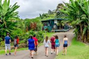 A Kona Coffee Farm Tour at the Greenwell farm