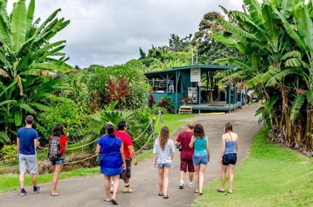A Kona Coffee Farm Tour at the Greenwell farm