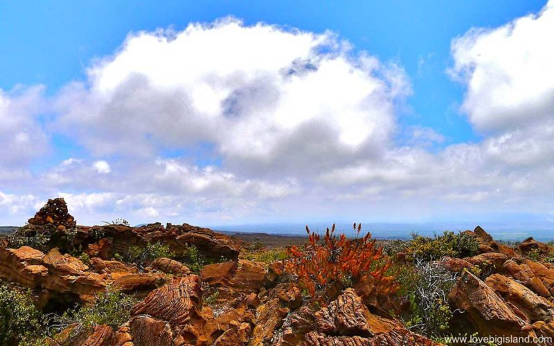 Mauna Loa from Volcano Village